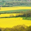 Rural landscape overlooking bright yellow fields of rapeseed — Stock Photo