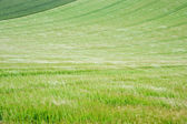 Landscape across agricultural fields on windy Summer day — Stock Photo