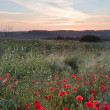 Poppy field landscape in English countryside in Summer - Stockfoto