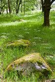Beautiful lush vobrant image of ancient woodland — Stock Photo