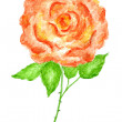 Rose Flower Watercolor Hand Drawn and Painted — Stock Photo