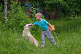 Boy playing with dog in the forest — Stock Photo