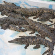 Crocodile farm — Stock Photo #11843478