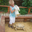 Boy playing with rabbit and turtle in sandbox — Stock Photo