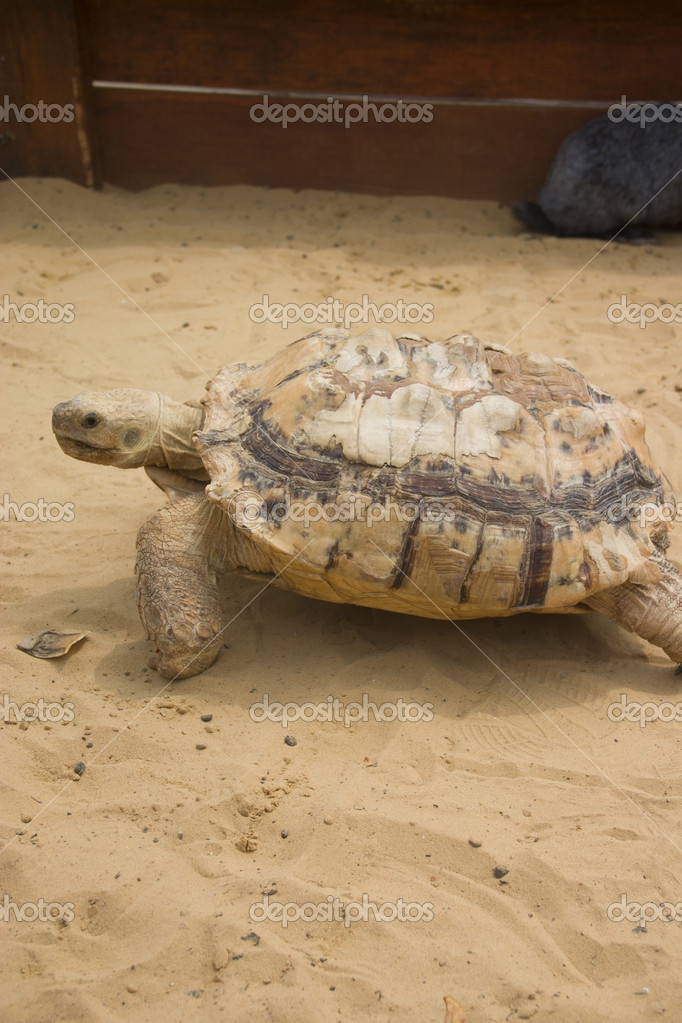 Big turtle in sandbox — Stock Photo #11843494