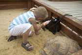 Boy feeding small black goat from bottle — Stock Photo