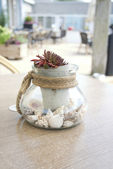 Glass decorative jug with cockleshells inside — Stock Photo