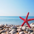 Red starfish on the beach — 图库照片