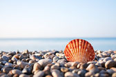 Sea shell and blue sky on background — Stock Photo