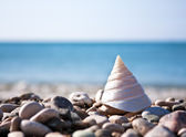 Sea shell with sea and blue sky — Stock Photo
