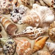 Sea shell on sand background — ストック写真