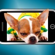 Stock Photo: Small ChihuahuDog Photo On Mobile Phone