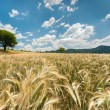 Beautiful nature landscape with crop - Stock Photo