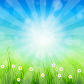 Summer Abstract Background with grass and tulips against sunny s — Stock Photo