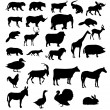 Vector set of animals silhouette — Stock Photo #12416625