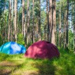 Tourist camping in the forest — Stock Photo