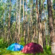 Camping in the forest — Stock Photo