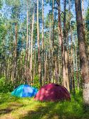 Ormanda kamp — Stok fotoğraf