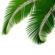 Palm leaves on white background Vector — Stock Vector #10967508