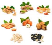 Grande collection de vecteur de noix et les graines mûr — Vecteur