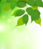 Nature background with fresh green leaves Vector illustration — ストックベクタ