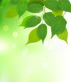 Taze yeşil yaprakları vektör çizim ile doğa arka plan — Stok Vektör