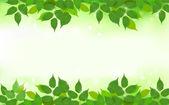 Fondo de naturaleza con verdes frescas hojas — Vector de stock