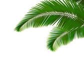 Las hojas de palma sobre fondo blanco — Vector de stock
