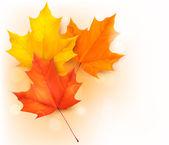 Automne fond avec des feuilles — Vecteur