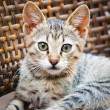 Little Kitten — Stock Photo