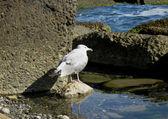 Seagull staying near a seashore. Summertime nature — Stock Photo