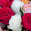 Several many-colored roses — Stock Photo