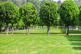 Green lawn and row of trees — Stock Photo