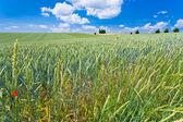 Campo del verano del país — Foto de Stock