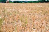 Straw field — Stock Photo
