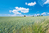 Summer country field — Stock Photo