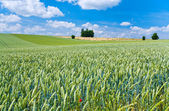 Summer country landscape — Stock Photo
