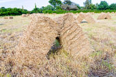 Straw stack in field — Stock Photo