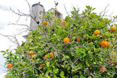 Tangerine tree in town Faro — Stock Photo