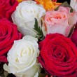 Stock Photo: Several many-colored roses