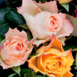 Three fresh roses — Stock Photo