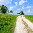 Stock Photo: Dirt country road along lucerne field