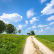 Stock Photo: Dirt road along lucerne field
