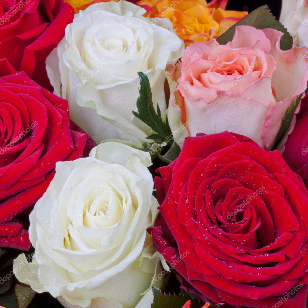 Several many-colored roses close up — Stock Photo #11172935