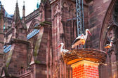 Stork nest near cathedral in christma — Stock Photo