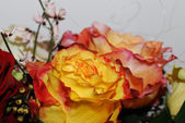 Beautiful roses — 图库照片