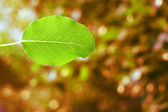 Green leaf background — Foto Stock