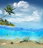 Underwater life near the beach of the tropical island — Foto Stock