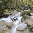 Mountain stream in the wood, autumn — Stock Photo