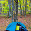 Tourist tent in the wood with backpacks — Stock Photo